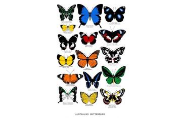 Australian Butterflies Tea Towel